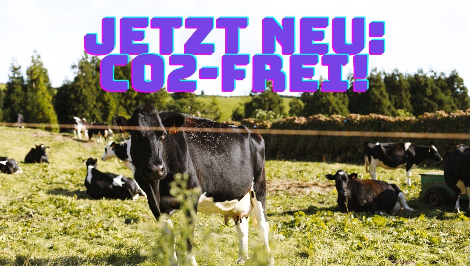 Kühe auf der Weide. Darübner steht Co2-frei